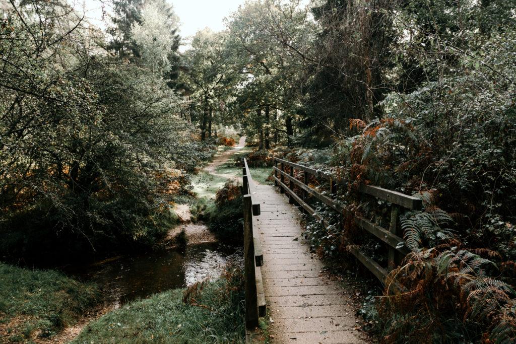 Wood with bridge over the river. Autumn time. Hampshire. Ewa Jones Photography