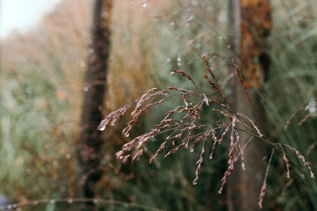 Macro photo of nature with water droplets. Hampshire. Ewa Jones Photography