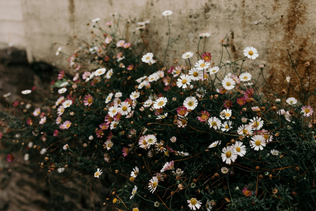 White and pink flowers behind the wall. Pretty colors. Hampshire photography. Ewa Jones Photography