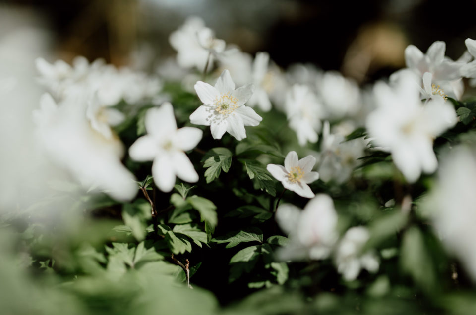 Lovely white blooming flowers. Easter crafts with kids. Ewa Jones Photography