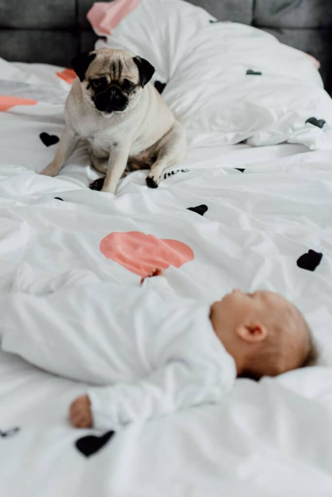 Newborn baby is wearing white baby grow and she is laying on the bed yawning. little dog is also on bed and looking at baby. in-home lifestyle newborn baby photo session in Hampshire. Ewa Jones Photography