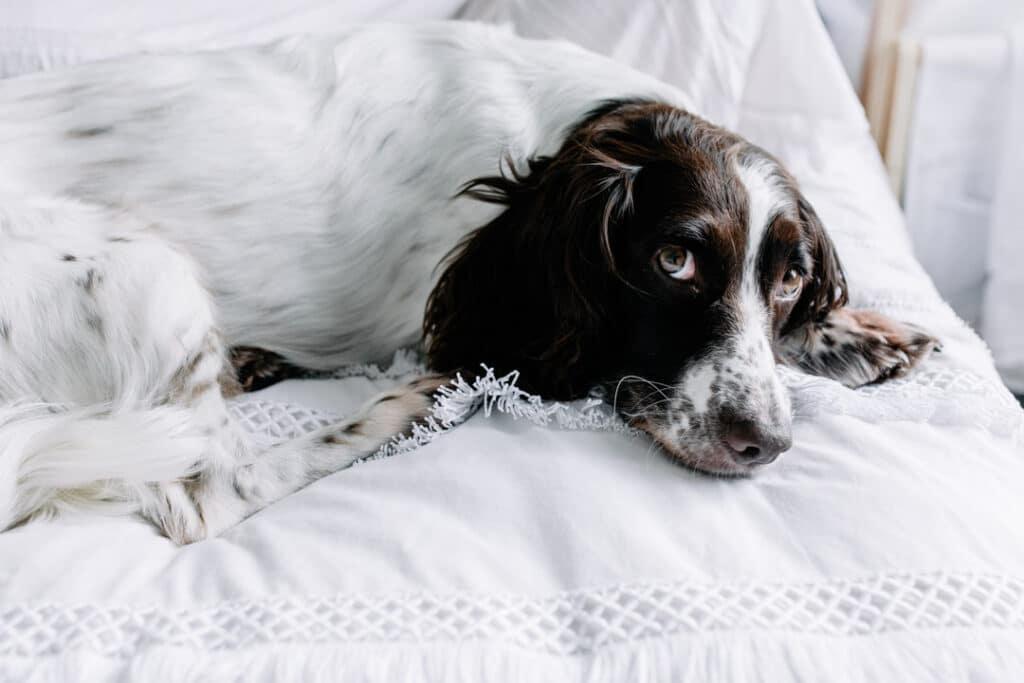 Close up detail of dog. Ewa Jones Photography